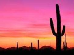 Despertares del desierto.